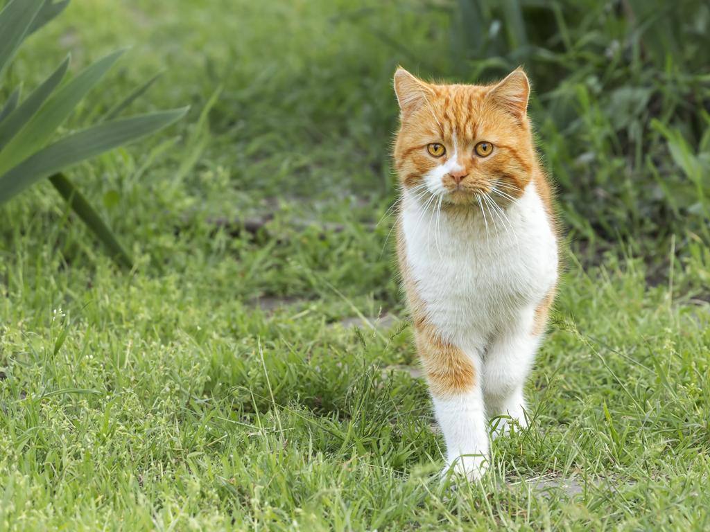 Aranžmani za kuce i mace postaju ozbiljan biznis - Usluge čuvanja, šetanja, kupanja, ulepšavanja, odevanja kućnih ljubimaca segmenti u kojima tražnja raste