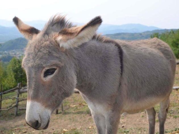 Farma magaraca u Zavidovićima razvija ruralni turizam - Uskoro otvaranje restorana domaće hrane, u planu i izgradnja etno sela