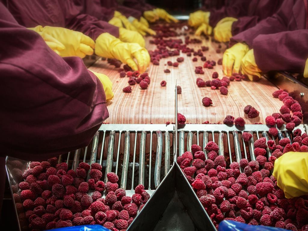Nectar završava postrojenje na biomasu u Vladičinom Hanu vredno 4 mil EUR - Otvaranje pogona za proizvodnju zelene energije u martu