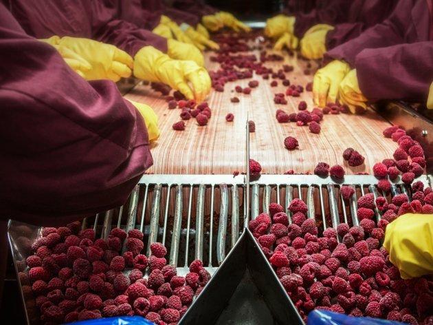 Malinari dijele ili uništavaju plodove - Zbog manjka hladnjača u ZDK dnevno propadne više od 20 tona