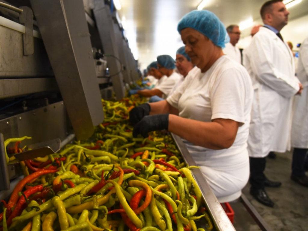 U Gospođincima otvorena fabrika za preradu povrća nemačke kompanije Mamminger konserven vredna 4 mil EUR