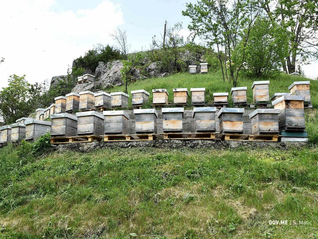 Porodična tradicija pretočena u uspješnu poslovnu priču - Mladi pčelar iz Šavnika ima 170 pčelinjih društava, u planu povećanje broja košnica i razvoj agroturizma
