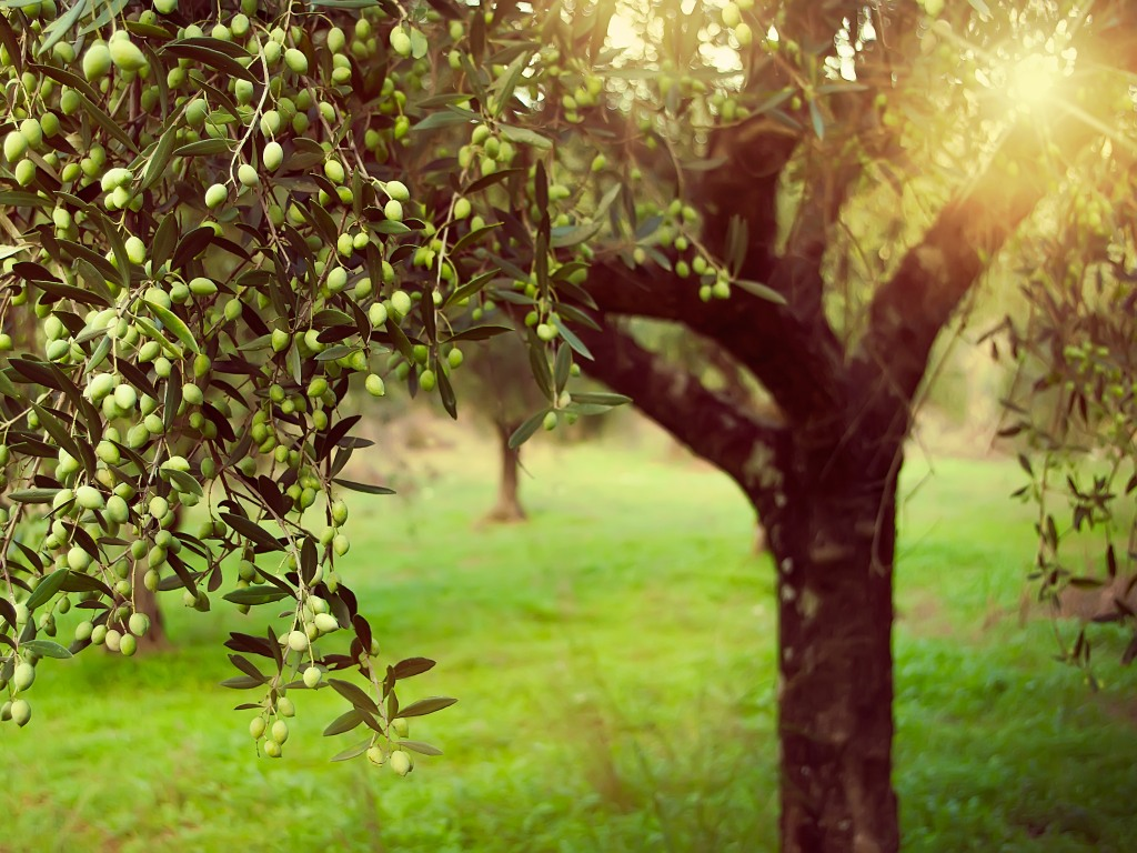 Na Braču niče eko komuna - Mala zajednica proizvodiće sama struju, vodu i hranu