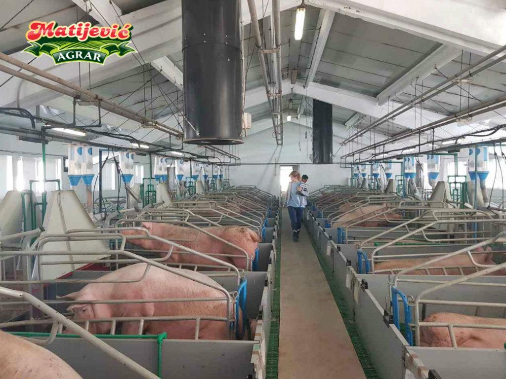 Ravnica iz Bajmoka gradiće farmu za tov 27.000 svinja - Investicija vrijedna 5 mil EUR