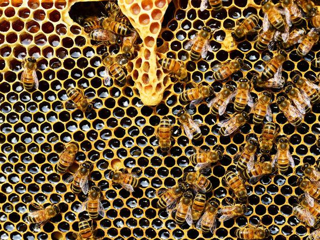 Pčele mjere radioaktivnost na Trgovskoj gori - Na lokaciji predviđenoj za zbrinjavanje radioaktivnog otpada postavljene košnice