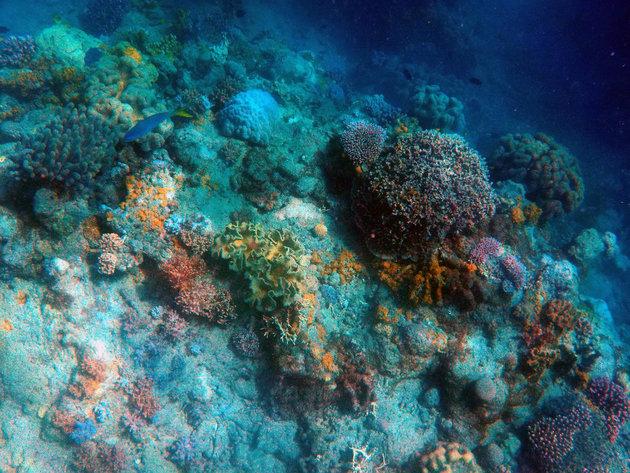 Međunarodni festival podvodnog filma 27. i 28. avgusta u Neumu