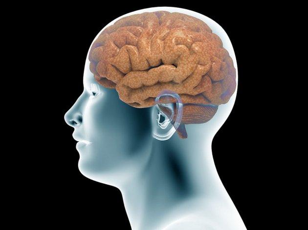 Mozak modernog čovjeka razvio se kasnije nego što se mislilo