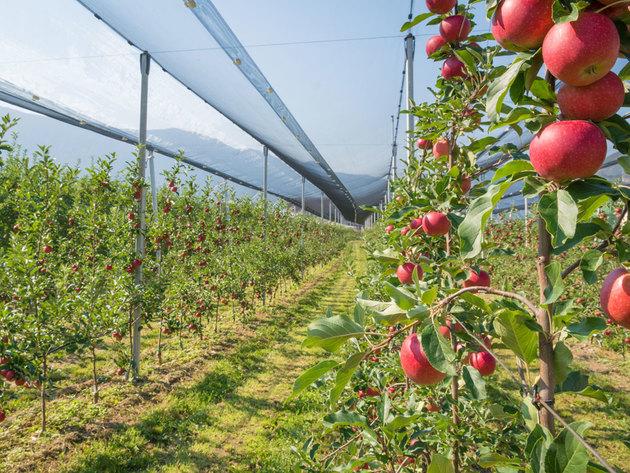 Izraelska revolucija - Dronovi koji beru voće