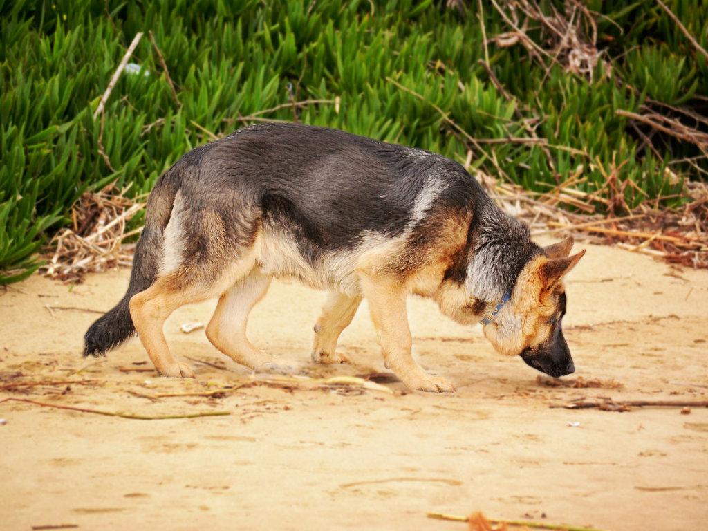 Bor dobija azil za pse - Izdata dozvola za gradnju, vrednost radova 90 miliona dinara