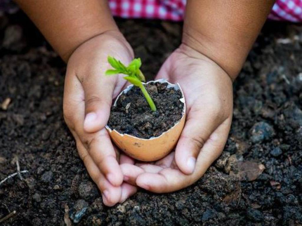 Projekat podrške domaćoj proizvodnji hrane u vrijeme pandemije - Nova Moba aplikacija, staklenici i zeleni tornjevi kao pomoć najugroženijim kategorijama stanovništva