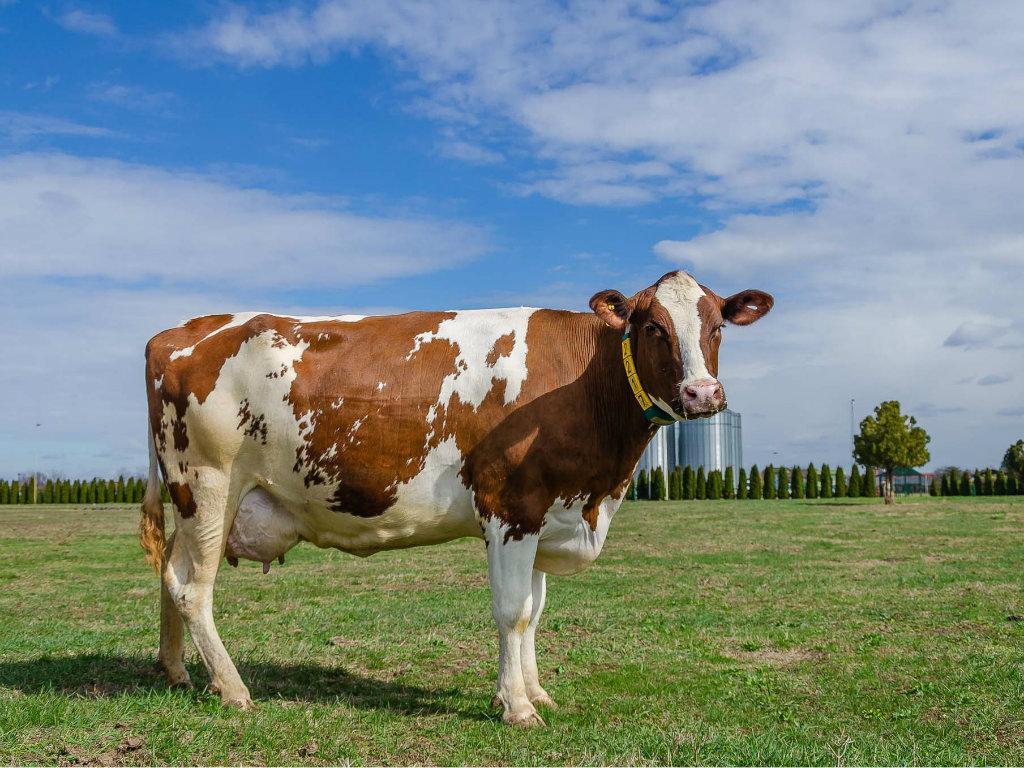 Farma Organica u Čurugu zaokružila proizvodni proces - Organsko mleko od krava koje jedu domaću organsku hranu i od čijeg se organskog otpada proizvodi struja