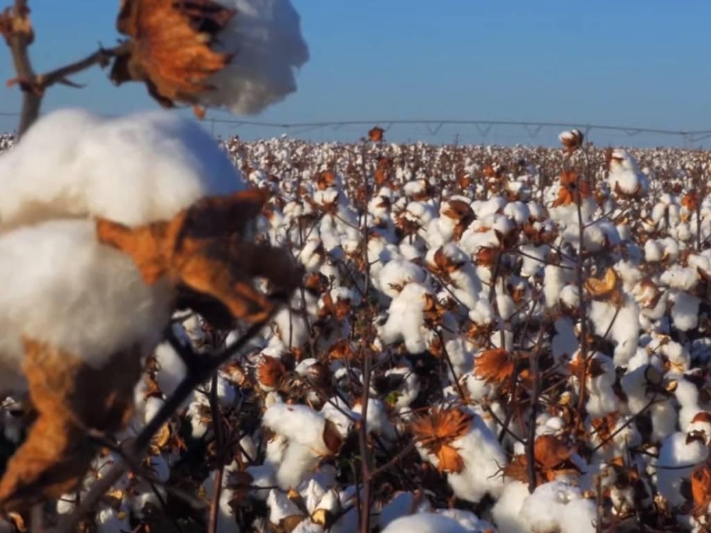 Sve veća primjena organskog pamuka - Ekološki prihvatljivija proizvodnja prirodnog materijala