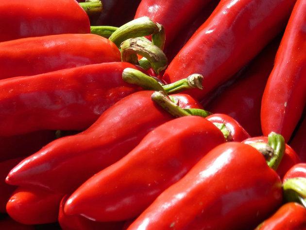 Za pola hektara paprike roge potrebno 2.500 EUR - Otkupna cena ove godine bila i 90 dinara
