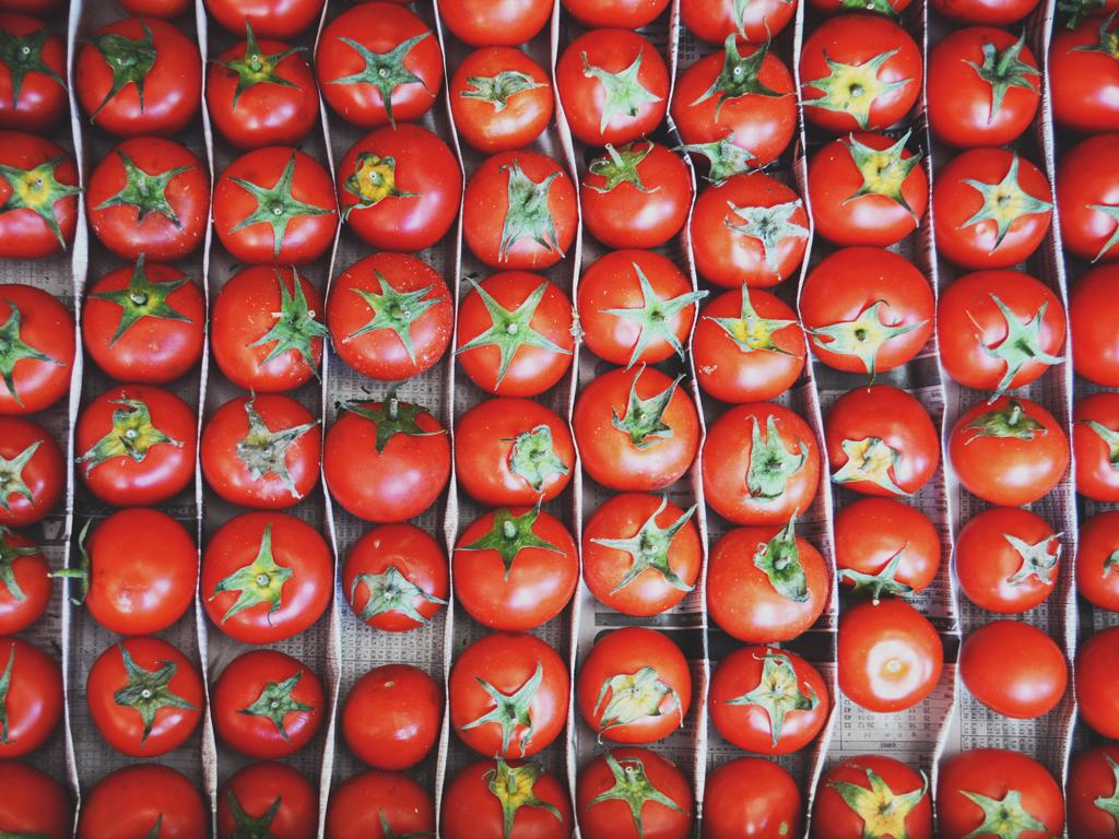 Hiljadu tona hercegovačkog paradajza biće isporučeno Podravci