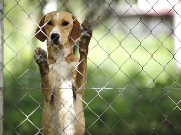 Za izgradnju azila za pse u Sarajevu potrebno 50 dunuma - Vlada KS pružice podršku za projekat vrijedan 20 mil KM