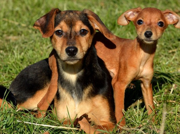 Vlasnici pasa i mačaka u Požarevcu moći će u stanu da drže samo jednog ljubimca