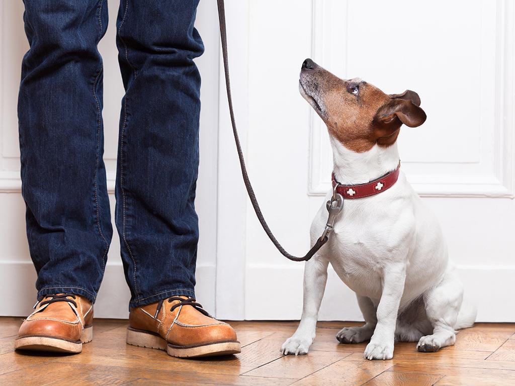 Četiri bolesti koje psi mogu da nanjuše kod ljudi