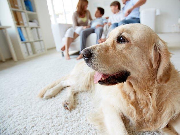 Hunde mögen uns wirklich