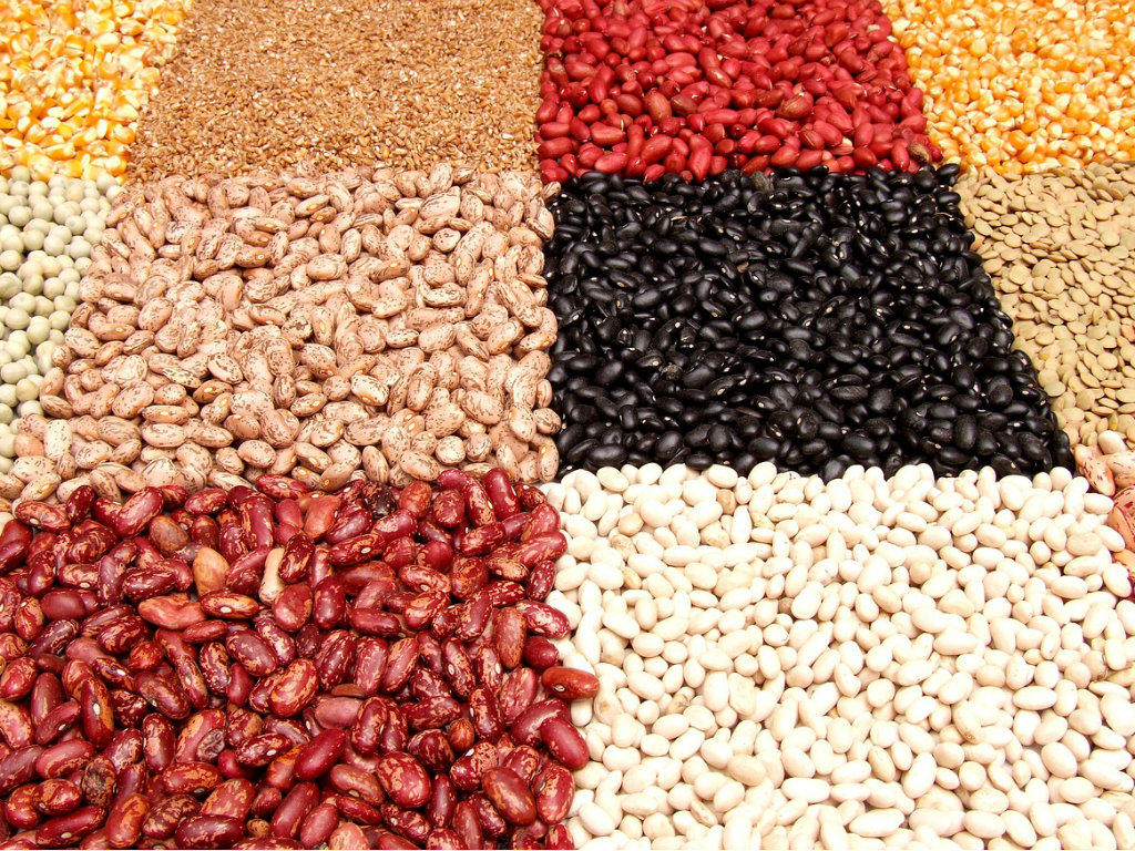 Međunarodni Bean festival 21. septembra u Novom Sadu