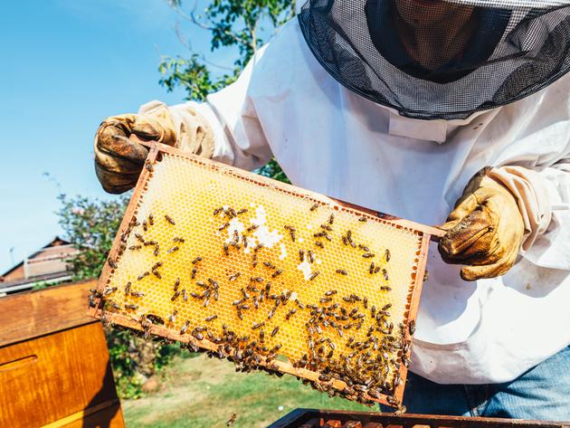 Četvrti Međunarodni sajam pčelarstva u Jagodini 24. avgusta