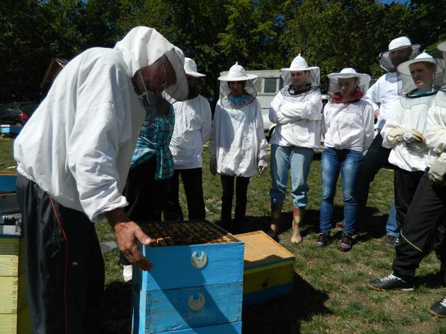 Praktična nastava za pčelare početnike