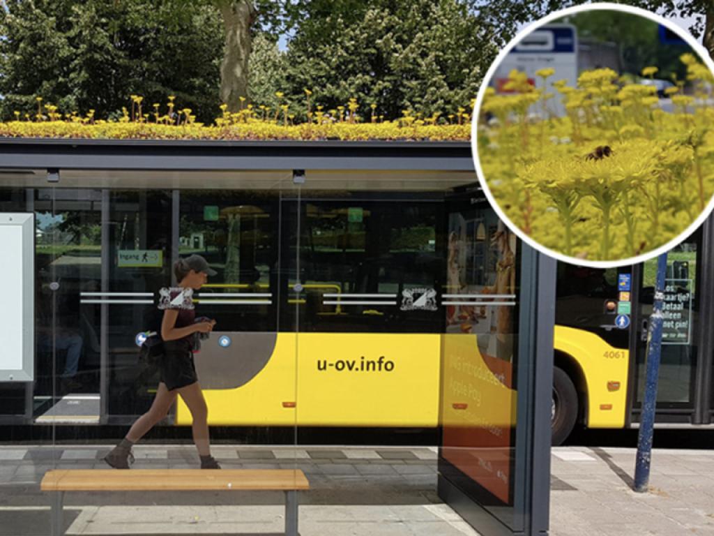 Više od 300 autobuskih stanica u holandskom Utrehtu pretvoreno u pčelinju oazu