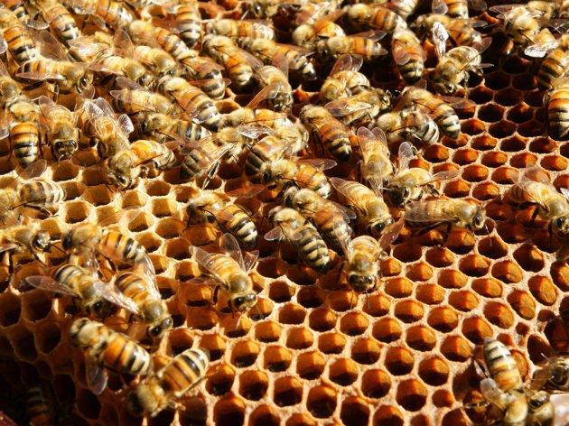 Nabavka opreme za pčelare na području opštine Pale
