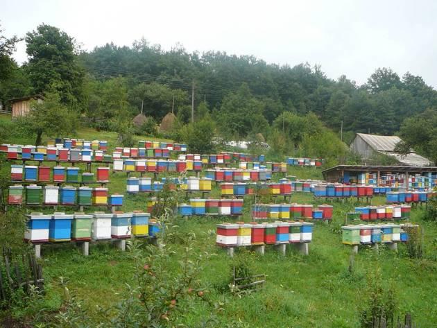 Pčelinjak Nebojše Radovića sa Sokoca