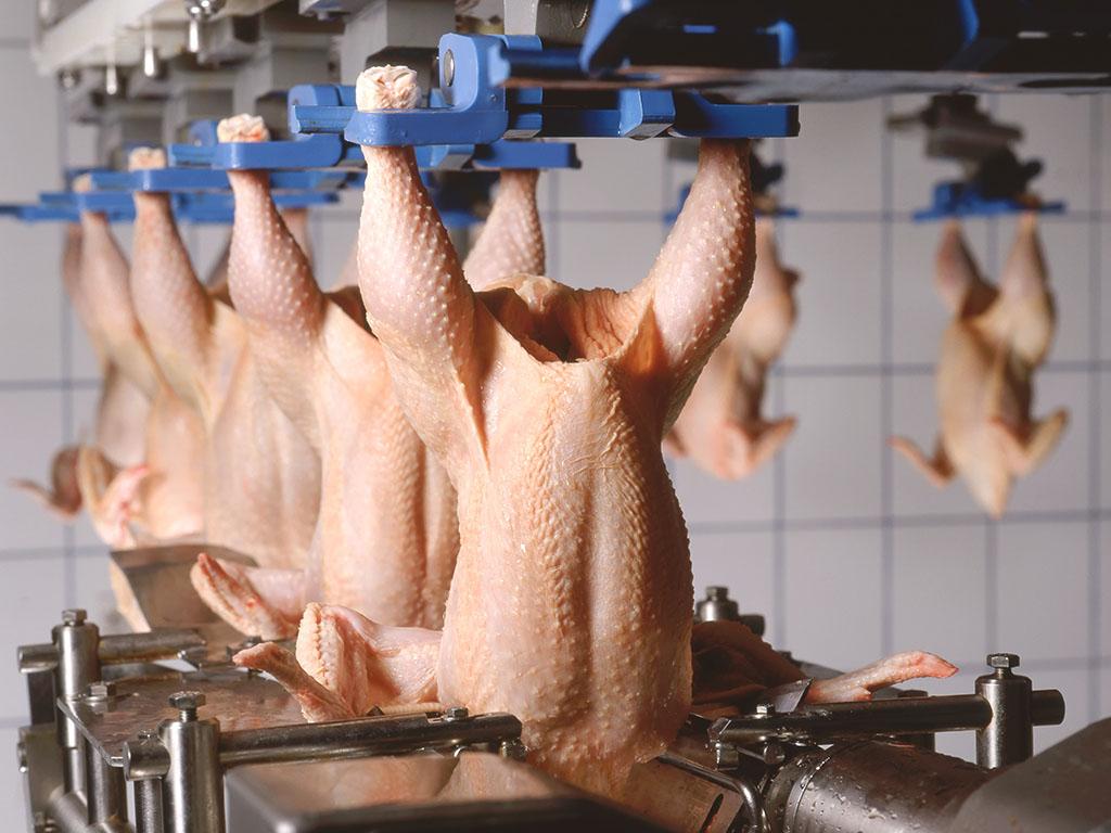 Prvi kamioni s piletinom narednih dana kreću ka EU - Domaći proizvođači se nadaju da će kvalitetom pridobiti evropske kupce