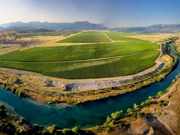 Počela berba stonog grožđa u Plantažama - Ovogodišnji plan 1,8 miliona kilograma