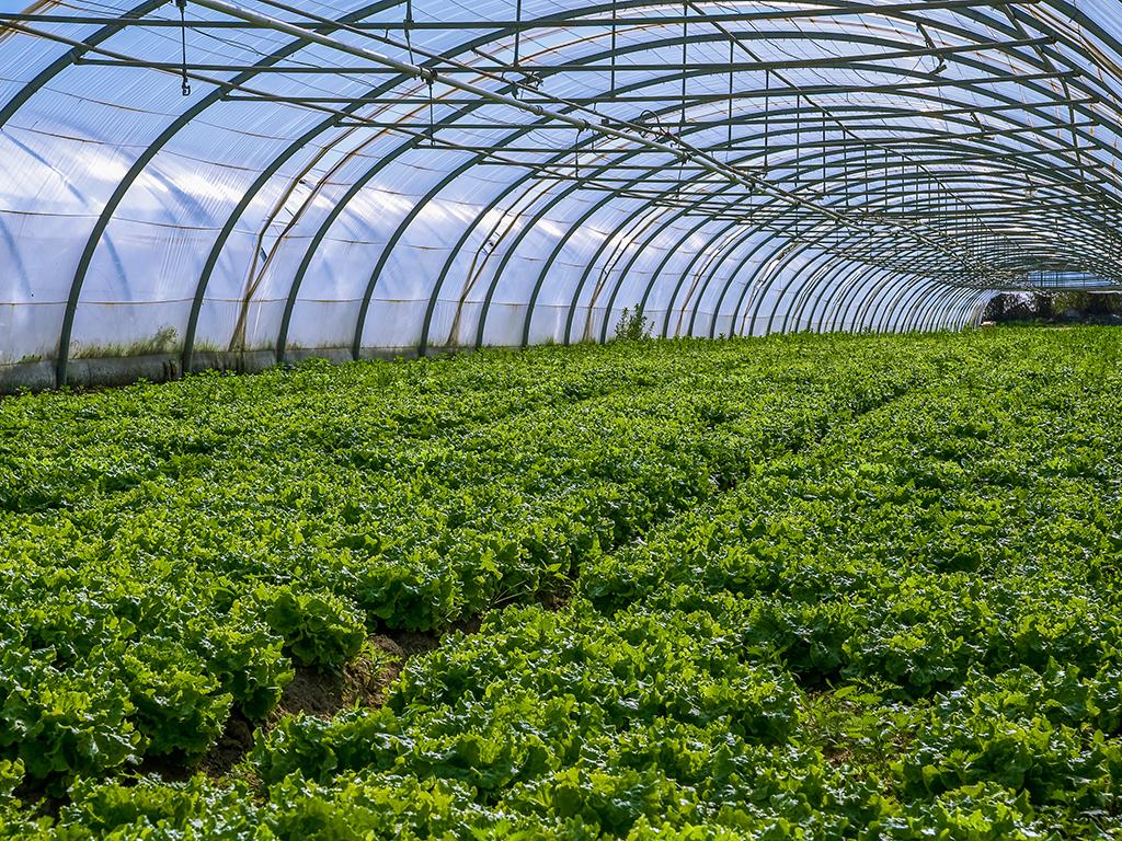 Divac poljoprivredni fondovi i ove godine u Užicu