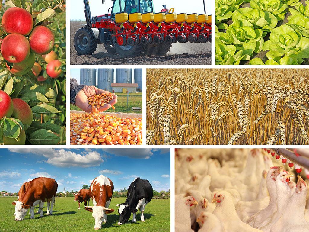 Crnoj Gori potrebna ozbiljna agrarna politika - Nekad je naš paradajz osvajao Evropu, sad ga uvozimo za 5,7 mil EUR