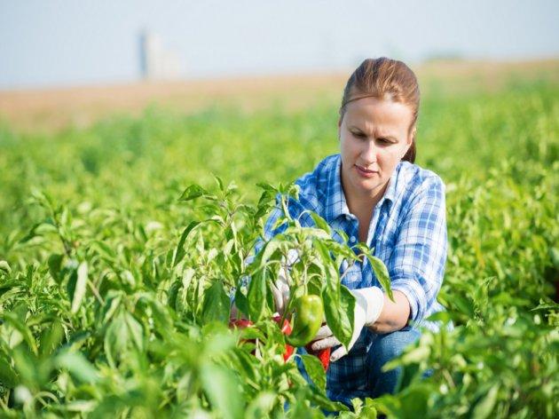 Raspisan konkurs za mlade poljoprivrednike - Prijave do 31. decembra
