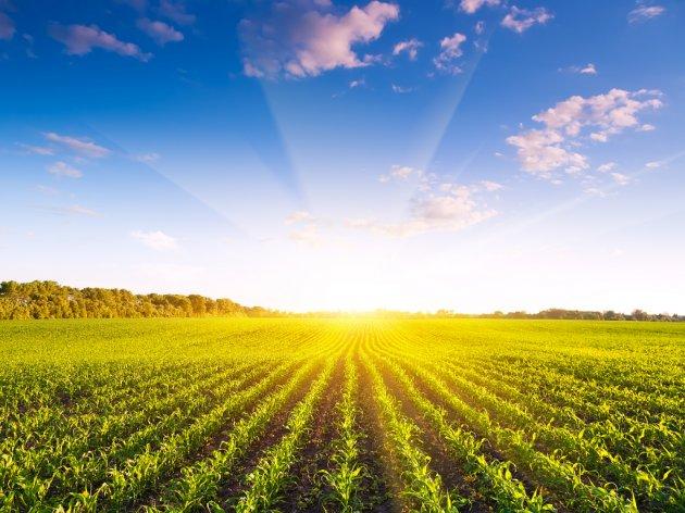900 Mio. Dinar für die Förderung der Landwirtschaft in der Vojvodina