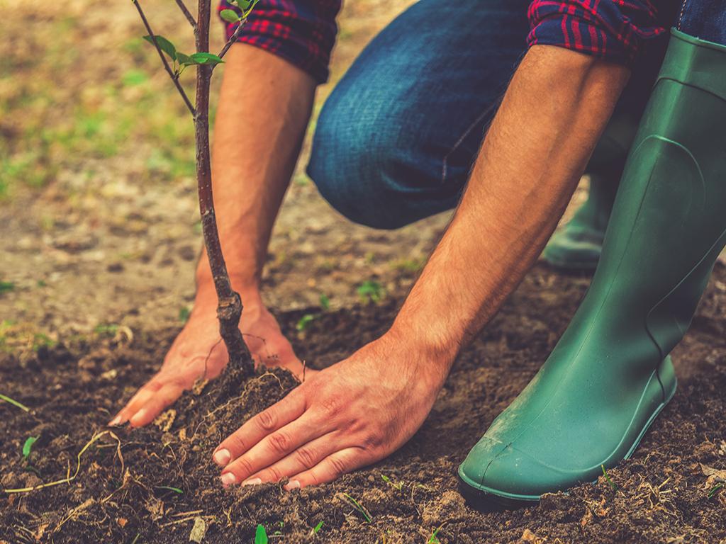 Srbija među prvima dobila pravo da izvozi sadnice u EU