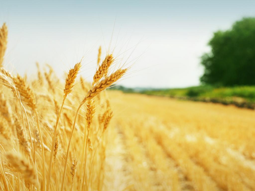 Prelomne godine za poljoprivredu u Srbiji - Kako do višeg nivoa primarne proizvodnje?