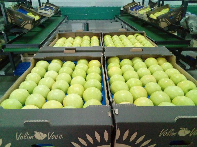 Jabuke iz Hercegovine stigle i do Maldiva - Na 340 hektara u Popovom polju gaje se najkvalitetnije voćne sorte
