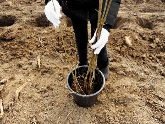 """Raste prodaja šumskog rastinja - """"Od ovoga lepo može da se živi"""", tvrde vlasnici rasadnika"""