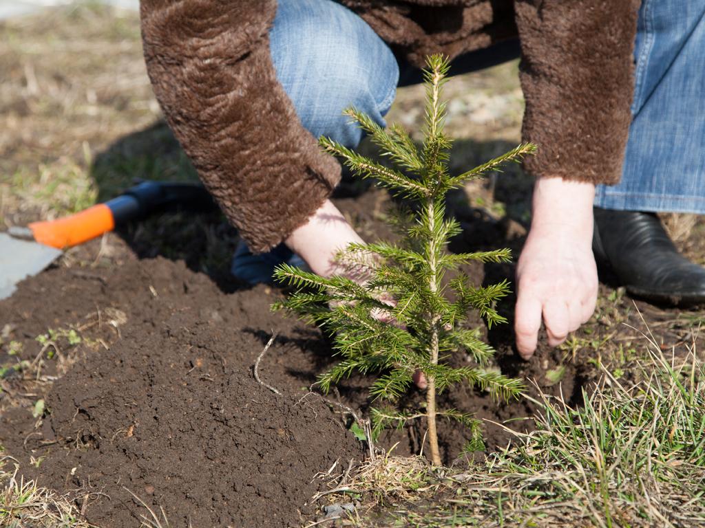 Kontejnerska proizvodnja sadnica preporod za šume u RS