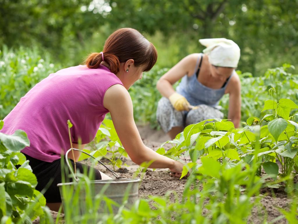 Promocijom proizvoda do boljeg plasmana - RS podržavanjem žena na selu želi da ekonomski osnaži domaćice