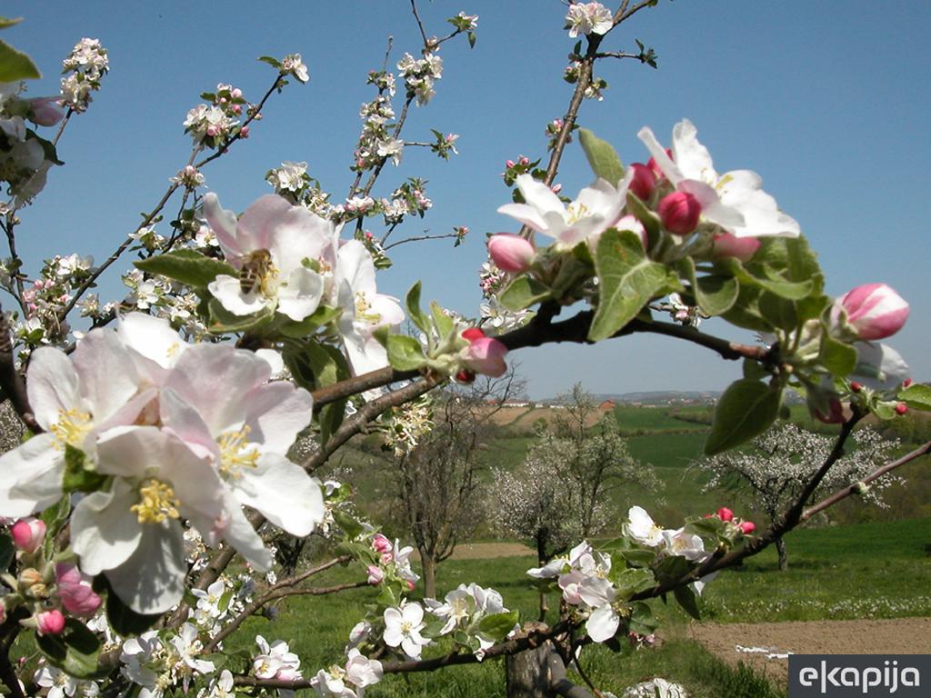 Uprava za zaštitu bilja i SPOS: Sprečimo trovanje pčela!