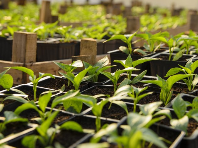 Porodica Dardić iz Gradiške proizvodi organski humus vrhunskog kvaliteta - Idealan za cvjećarstvo i plasteničku proizvodnju