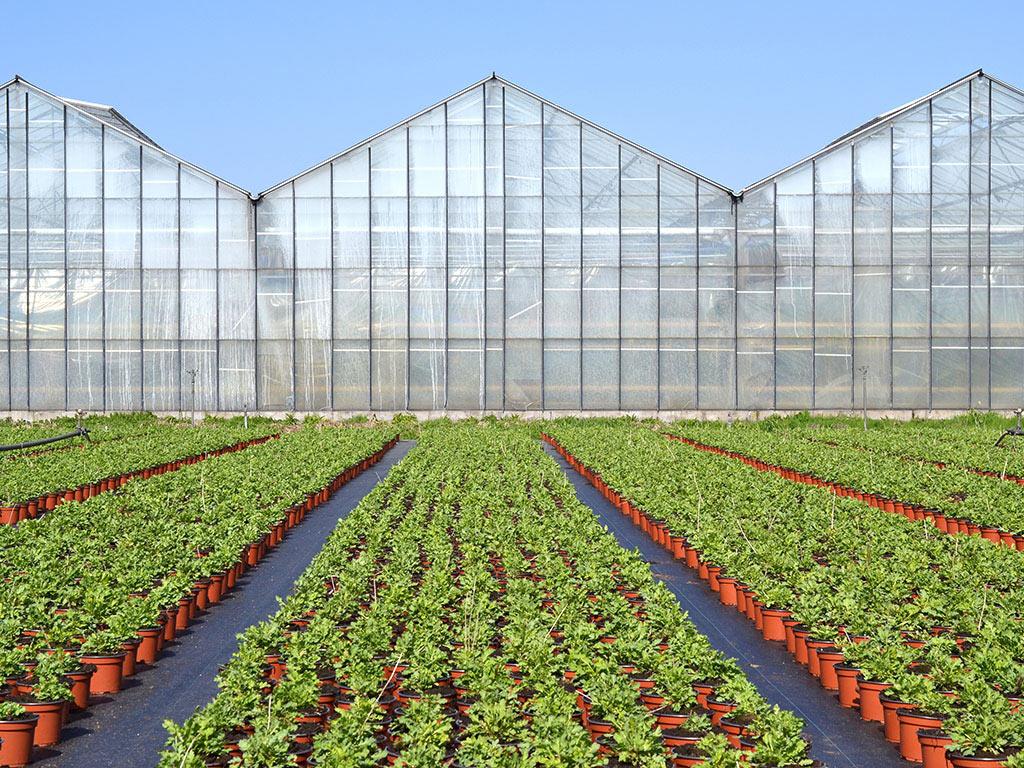 Porodica Stanojčić iz Vrnjačke Banje uspešno se bavi proizvodnjom magnolija - Najtraženije su u proleće kada cvetaju