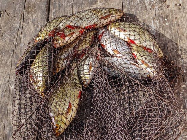 Uskoro javna rasprava o gradnji ribarske luke i marine u Port Mileni