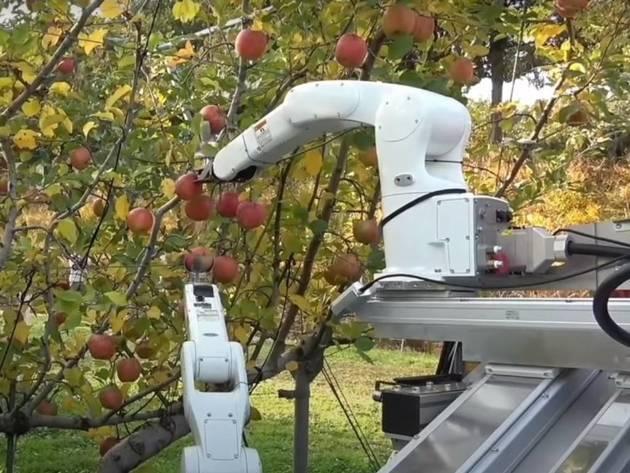 Japanci konstruisali prototip robota za berbu voća (VIDEO)