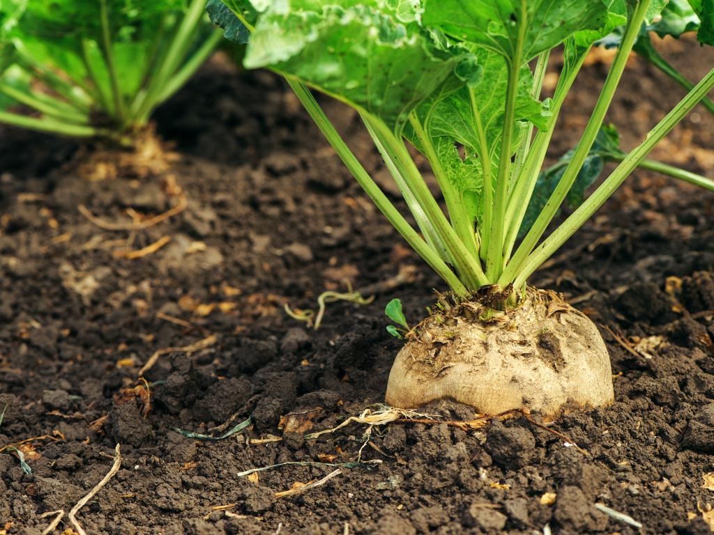 Sunoko otvorio Istraživačko-razvojni centar - Efikasnija proizvodnja šećerne repe