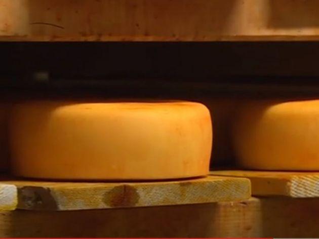 Kako se pravi sir trapist?