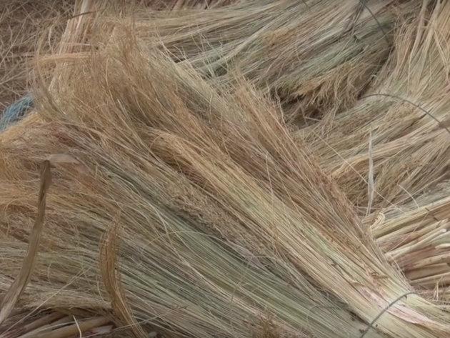 Sirak donosi veći rod u odnosu na druge tradicionalne kulture - Ulaganja kao u kukuruz