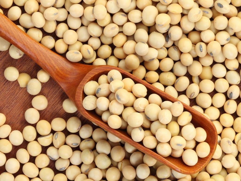 Stroga kontrola uvoza genetski modifikovanih proizvoda - Sa granice vraćeno 1.000 tona GM soje