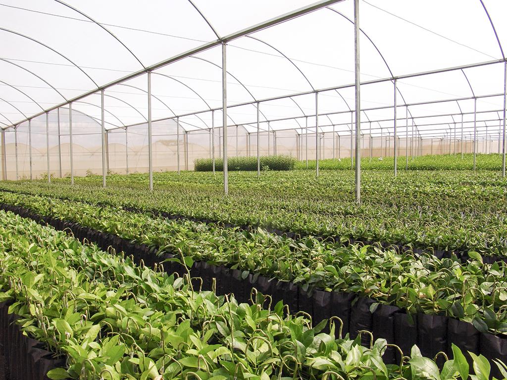 Proizvodnja hrena prilika za povrtare - Na području Prijedorske regije zasijana prva ogledna polja